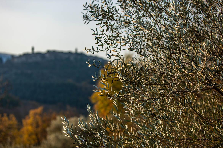 La Seggianese, Blog